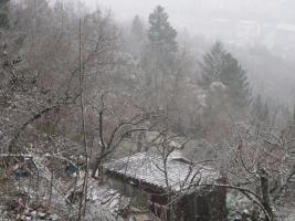 Foto 4 Ruhiges Gartengrundstück auf der Wangener Höhe