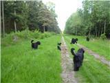 Foto 4 Russische Schwarze Terrier