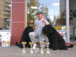 Russische Schwarzer Terrier zu verkaufen