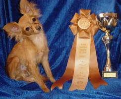 Foto 5 Russischer Toy Terrier Welpe