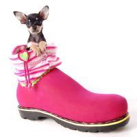 Foto 4 Russkiy Toy Terrier Welpen/ Mini-Hunde bis 28 cm & bis 3 kg
