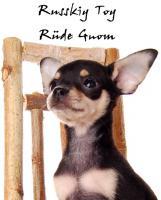 Foto 12 Russkiy Toy Terrier Welpen/ Mini-Hunde bis 28 cm & bis 3 kg