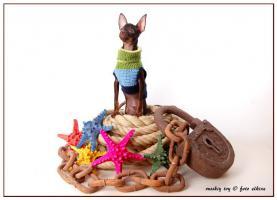 Foto 3 Russkiy Toy, Russischer Toy, Toy Terrier Welpen, ähn.Chihua, Prager Rattler