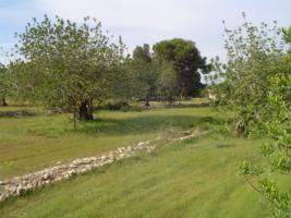 SCHNÄPPCHEN FINCA Traumgrundstück Spanien Costa Azahar Benicarlo zum bebauen mit Villa
