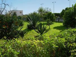 Foto 4 SCHNÄPPCHEN: HAUS MIT MEDITERRANEM GARTEN + BAUGRUNDSTÜCK in Palma de Mallorca