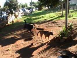 Foto 2 Sachspenden für Italiens Strassenhunde
