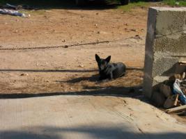 Foto 4 Sachspenden für Italiens Strassenhunde