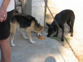 Foto 5 Sachspenden für Italiens Strassenhunde