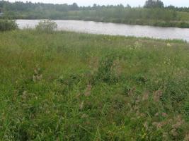 Sale 46 Hektar Grundstück in Russland - Region Pskow auf dem See. Preis 16 600 Euro für den gesamten Standort.