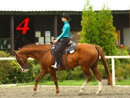 Foto 5 Sale of horses APH