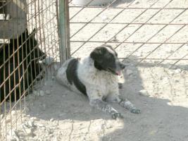 Sammy (geb. 2005)