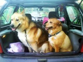 Foto 12 Sanfter, gro�er Traumhund abzugeben !