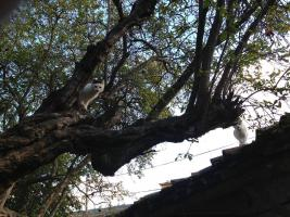Foto 3 Sanny, Katze, 3 Jahre, eine sehr traurige Dame