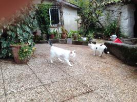 Foto 4 Sanny, Katze, 3 Jahre, eine sehr traurige Dame