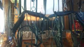 Foto 3 Sattel, Geschirr + Kutsche ( Anhänger ) für Pony´s