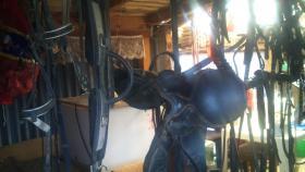 Foto 4 Sattel, Geschirr + Kutsche ( Anhänger ) für Pony´s