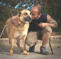 Foto 5 Schäferhund Mix DINO sucht ein Zuhause oder PS