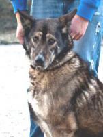 Schäferhund Mix MARTINA sucht ein Zuhause oder PS