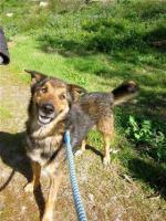 Schäferhund Mix MISTYC sucht ein Zuhause oder PS
