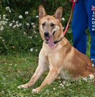 Foto 6 Schäferhund Mix TANGO sucht ein Zuhause oder PS