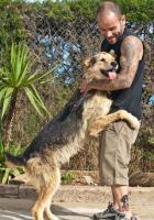 Foto 4 Schäferhund Mix TURKO sucht ein Zuhause oder PS