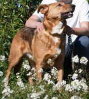 Foto 5 Schäferhund TITA sucht ein Zuhause oder PS