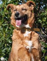 Foto 10 Schäferhund TITA sucht ein Zuhause oder PS