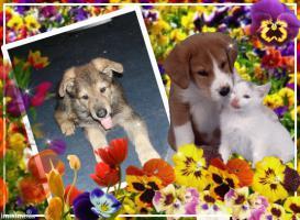 Foto 5 Sch�ferhund- Hundewelpen