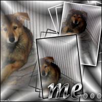 Foto 6 Schäferhund- Hundewelpen