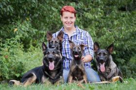 Foto 2 Sch�ferhunde von der Schwertfellnerfarm