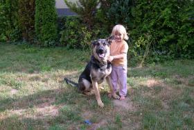 Schäferhundrüde 1 Jahr zu verschenken