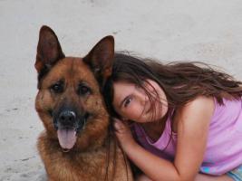 Foto 7 Schäferhundwelpen, kräftig, gesund, rote SV-Papiere, Familienaufzucht, Top!