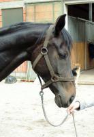 Foto 2 Schicke 6 jährige Oldenburger Stute aus Zeitgründen zu verkaufen