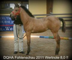 Foto 2 Schickes Allrounder-QH-Absetzerstütchen - buckskin – Hollywood/Fritz Power Enkelin