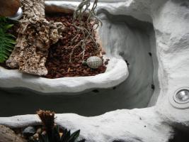 Foto 2 Schildkröte mit terarium