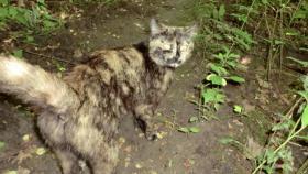 Schildpatt Katze ca. 2 J. sucht neues Zuhause
