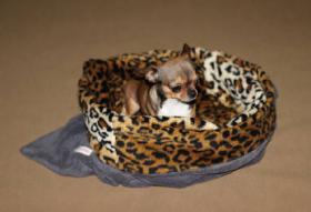 Schlafsäcke für Hunde und Katzen