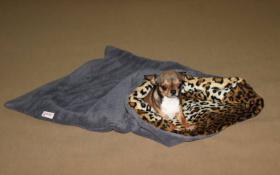 Foto 2 Schlafsäcke für Hunde und Katzen