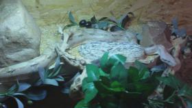 Foto 3 Schlangen