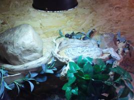 Foto 4 Schlangen
