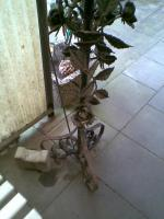 Foto 4 Schmiedeeisen Laterne zu verkaufen