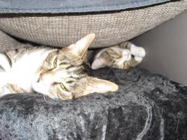 Foto 2 Sch�ne Katzen Geschwister