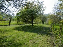 Foto 3 Schöne Streuobstwiese in Neuffen
