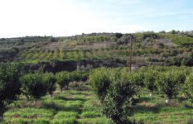 Schoenes Grundstueck nahe Drepano