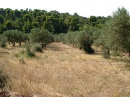 Schönes Grundstück nahe Traganas/Griechenland