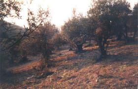 Schönes Hanggrundstück auf Skiathos/Griechenland