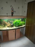 Schönes komplettes Panorama Aquarium mit Besatz und Zubehör ca 600 l