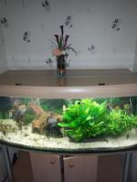 Foto 2 Schönes komplettes Panorama Aquarium mit Besatz und Zubehör ca 600 l