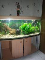 Foto 3 Schönes komplettes Panorama Aquarium mit Besatz und Zubehör ca 600 l