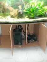 Foto 4 Schönes komplettes Panorama Aquarium mit Besatz und Zubehör ca 600 l